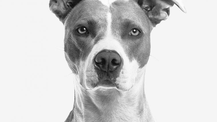 Dogs Perfect® – nieuw op de markt!