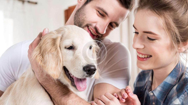 Pet Sitting & Dog Walking
